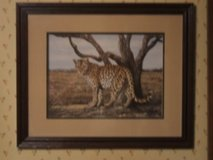 ~LEOPARD PICTURE~ in Camp Lejeune, North Carolina